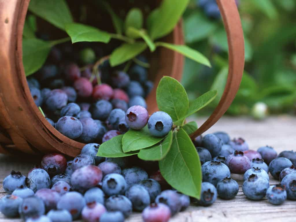 Blueberries, Not Just Any Fruit Juice, They Cut Risk Due To Diabetes Type-2