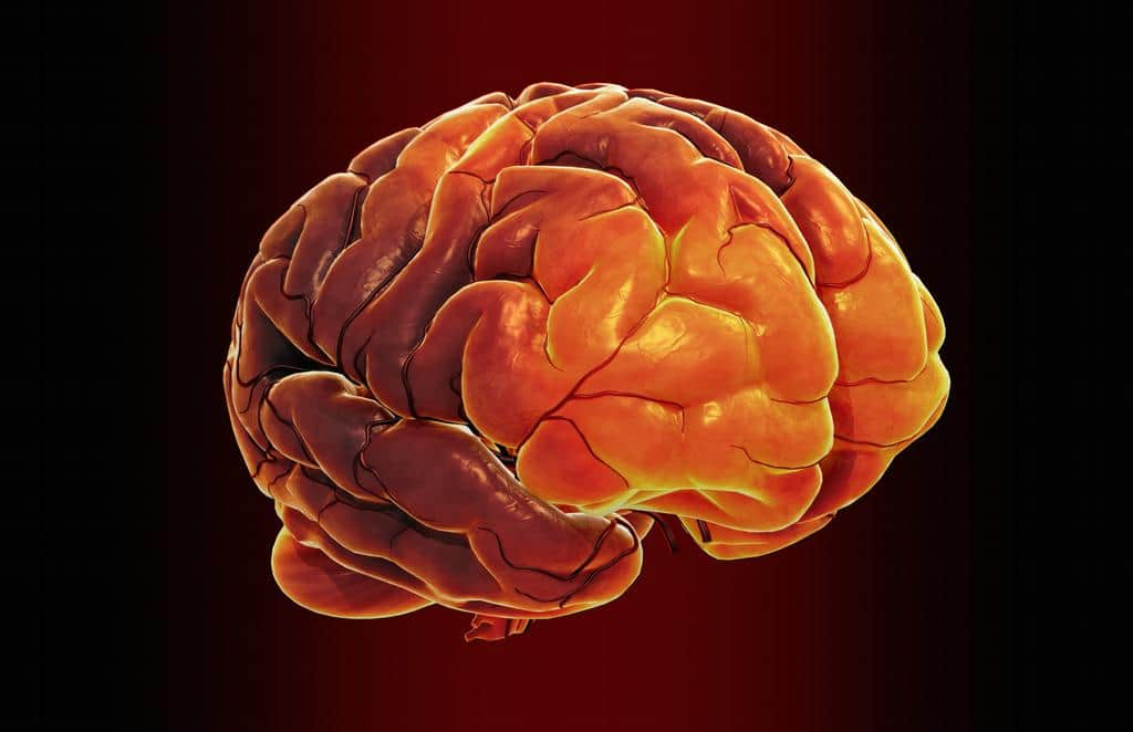 Implant of 'Brain window' devised