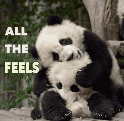 All the feelings are too good! panda memes