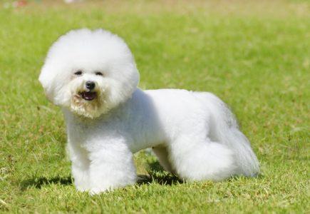 tiny dog breeds