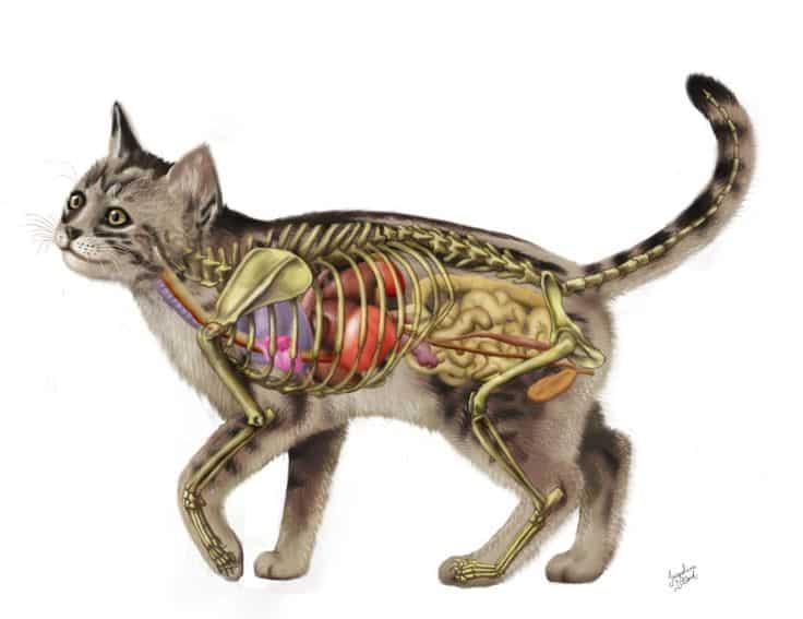 Cats bones