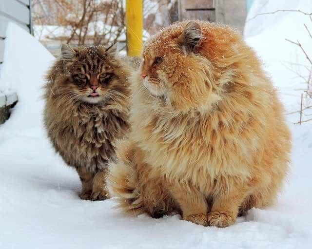 hairy animals