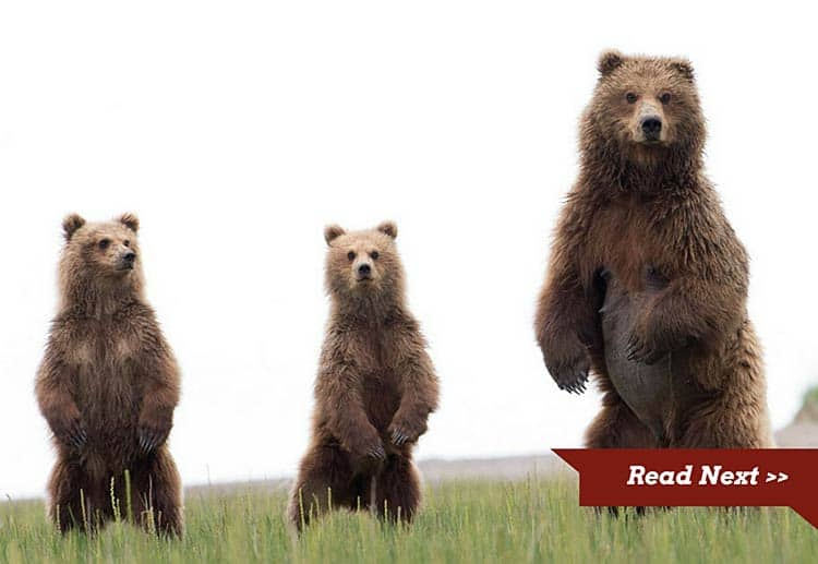 Soon the rescued bears were a happy family once again.