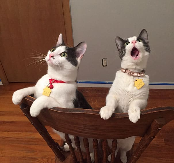 dramatic cats