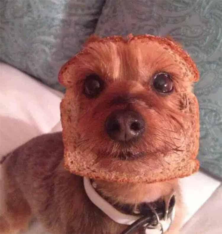 Pup Toast Face