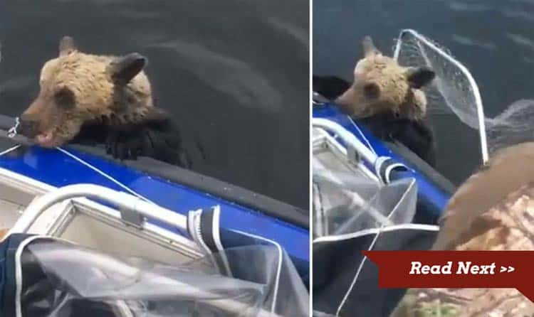 Fishermen rush to the aid of the stricken bear cubs.