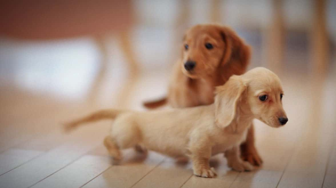 3 Eye-Opening Reasons Not to Buy a Pet Store Puppy