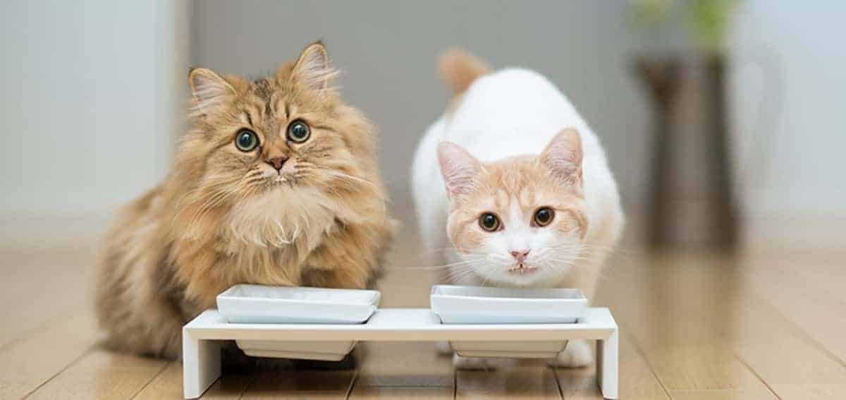 The Best Dry Cat Food for Your Feline Friends
