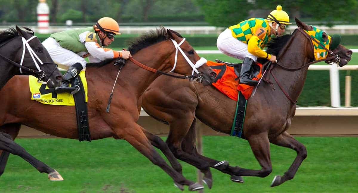 Tips to Consider While Embarking on a Horse Race