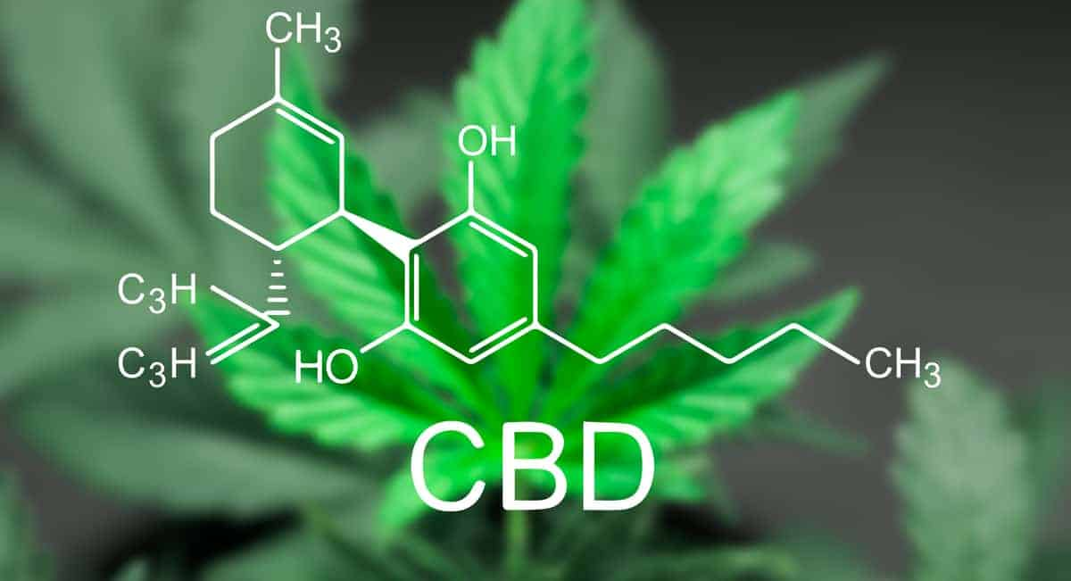 Terravida analysis of CBD legislation, news and trends
