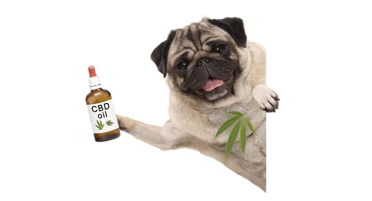 Is CBD Safe for Dogs? 5 Things Pet Owners Need to Know