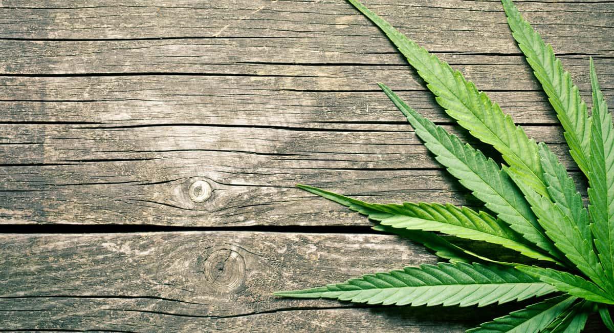 4 Cannabis Vacations Every Hemp Lover Should Go On