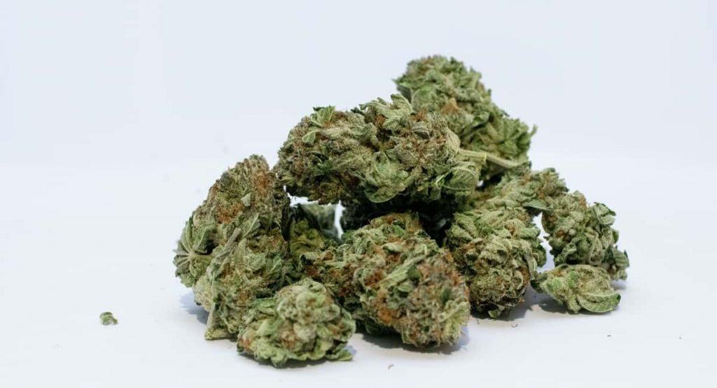 Indica vs Sativa Marijuana How Are They Different