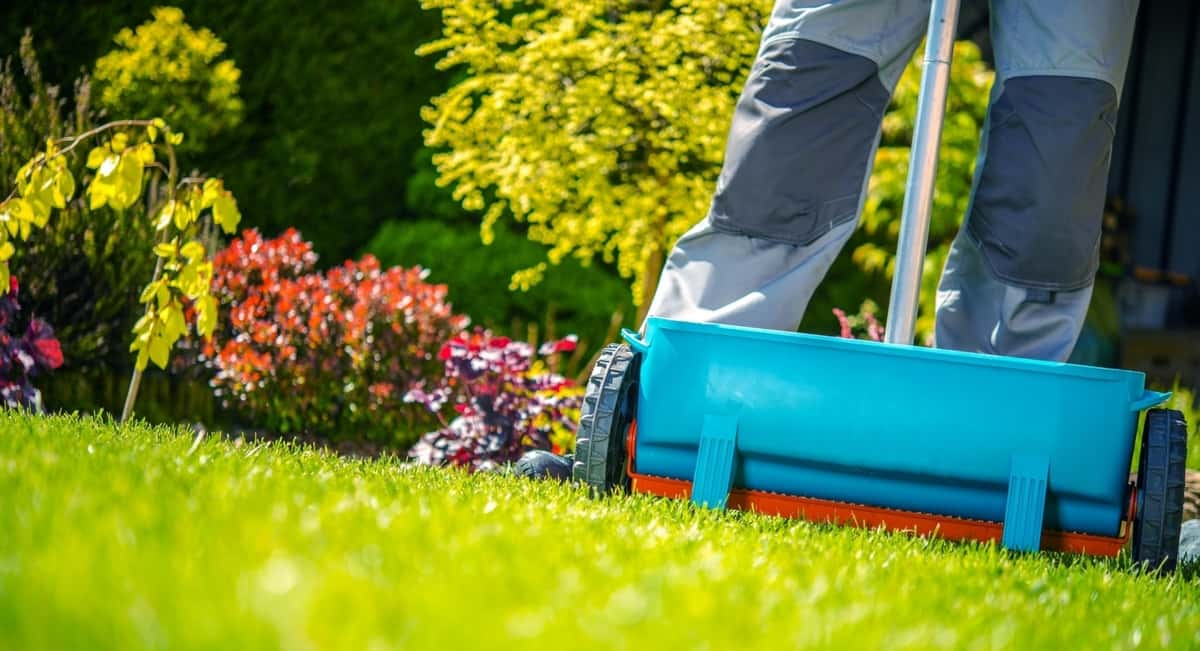 5 Essential Tips for Improving Your Lawn
