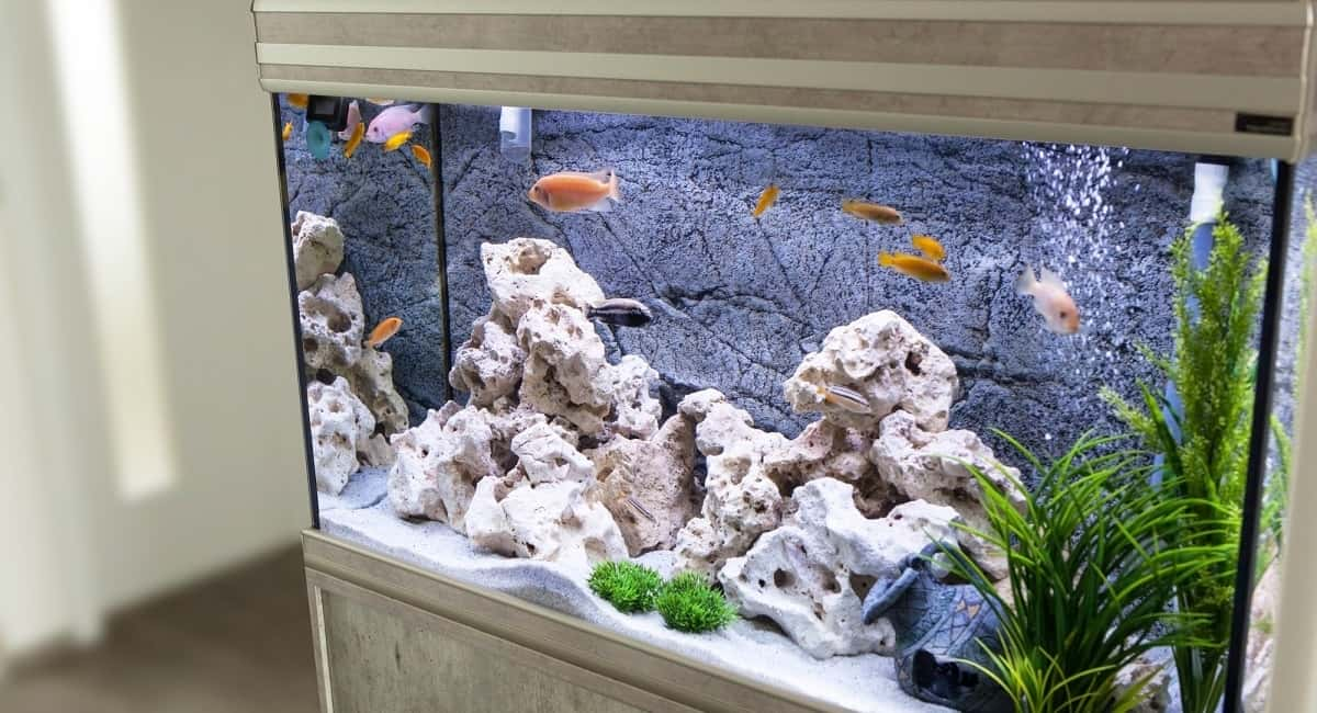 Aquarium Ideas: 2 Key Tips for Decorating Your Boring Aquarium