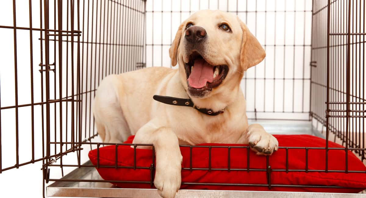 How to Buy the Perfect Puppy Crate