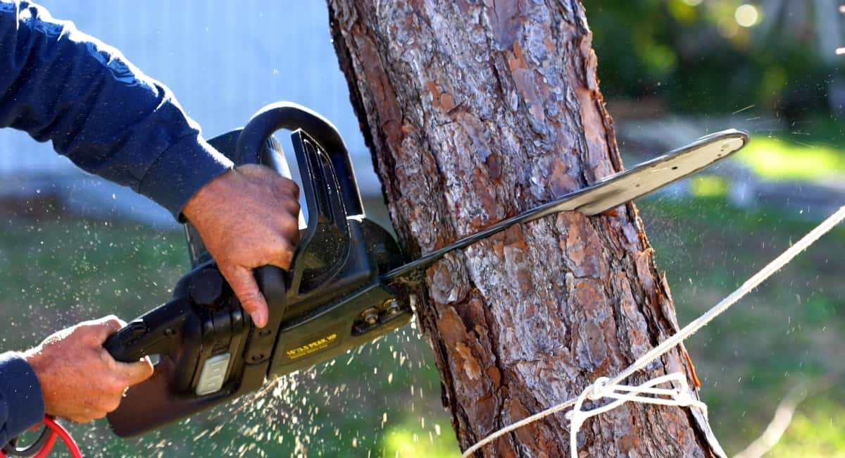 Understanding the Process of Tree Cutting and Removal