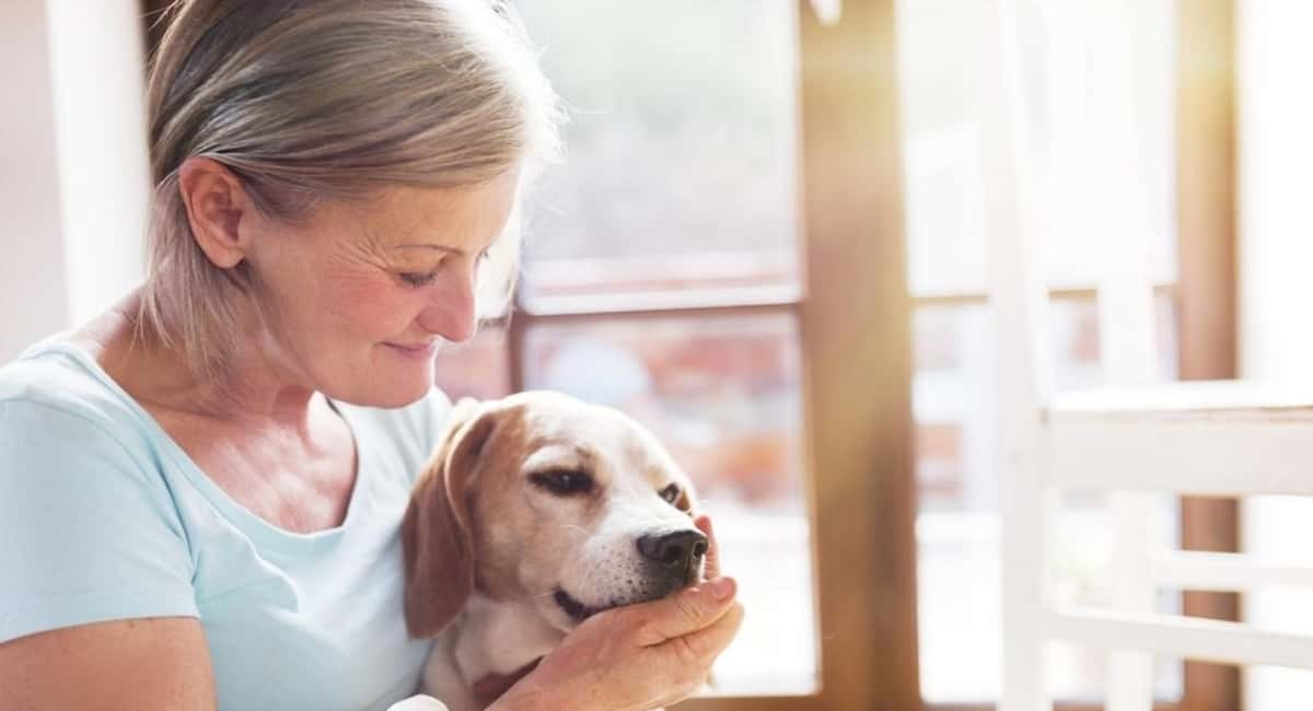 Natural Healers: How Therapy Animals Can Help You Overcome Addiction