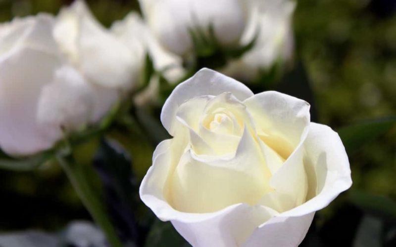 how to express condolences