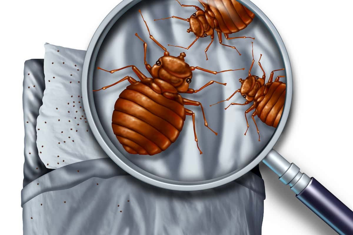 bed bug facts and myths