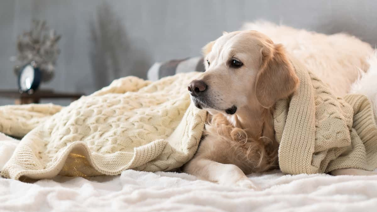 Manage Pets