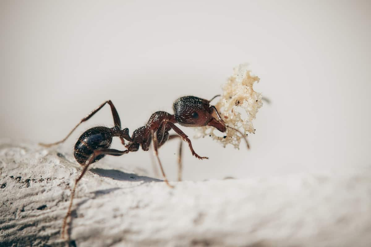 how to deal with ants