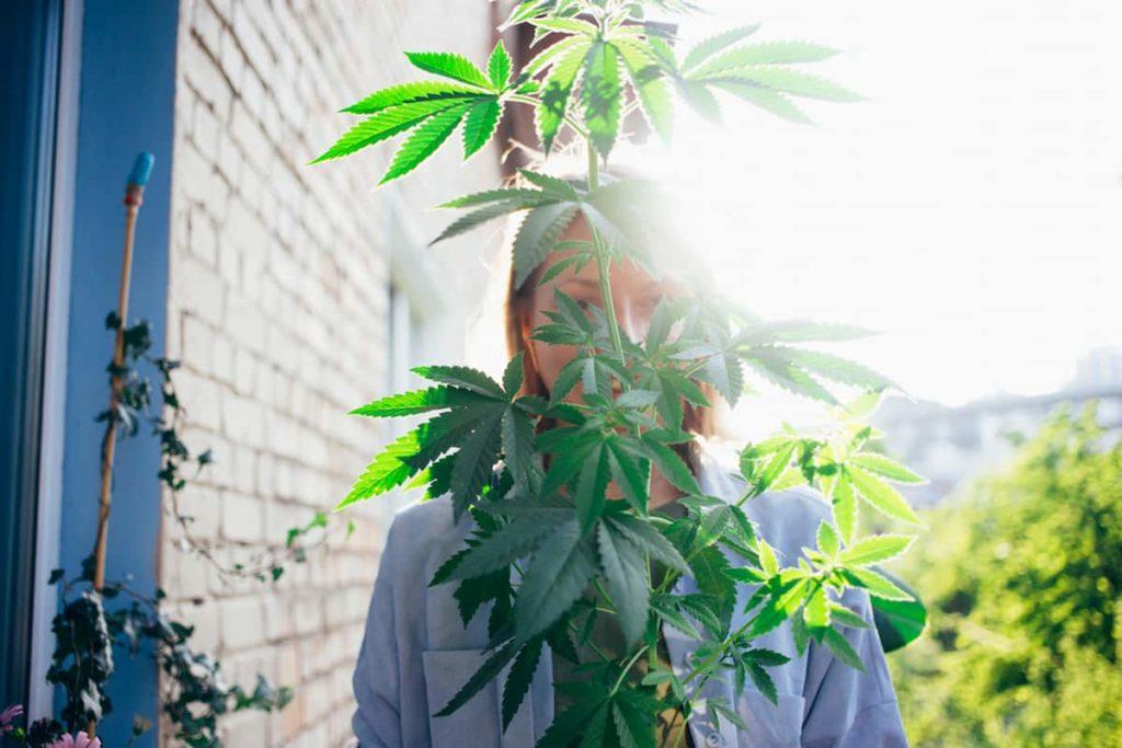 Legalizing Cannabis
