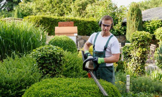 Professional Landscape Designer