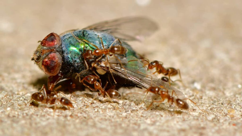 Don't Ignore the Early Signs of Termites