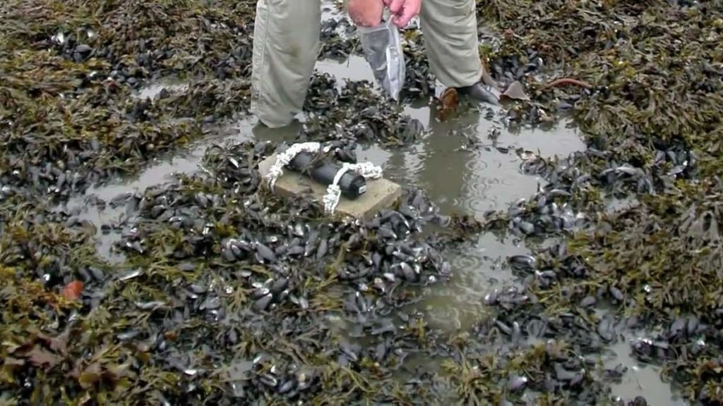 Oil spills on land How to manage