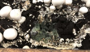 Pathogens In The Soil