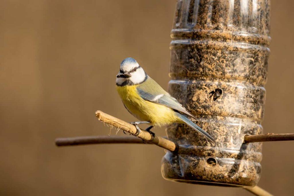 Choose the Right Type of Backyard Bird Feeder