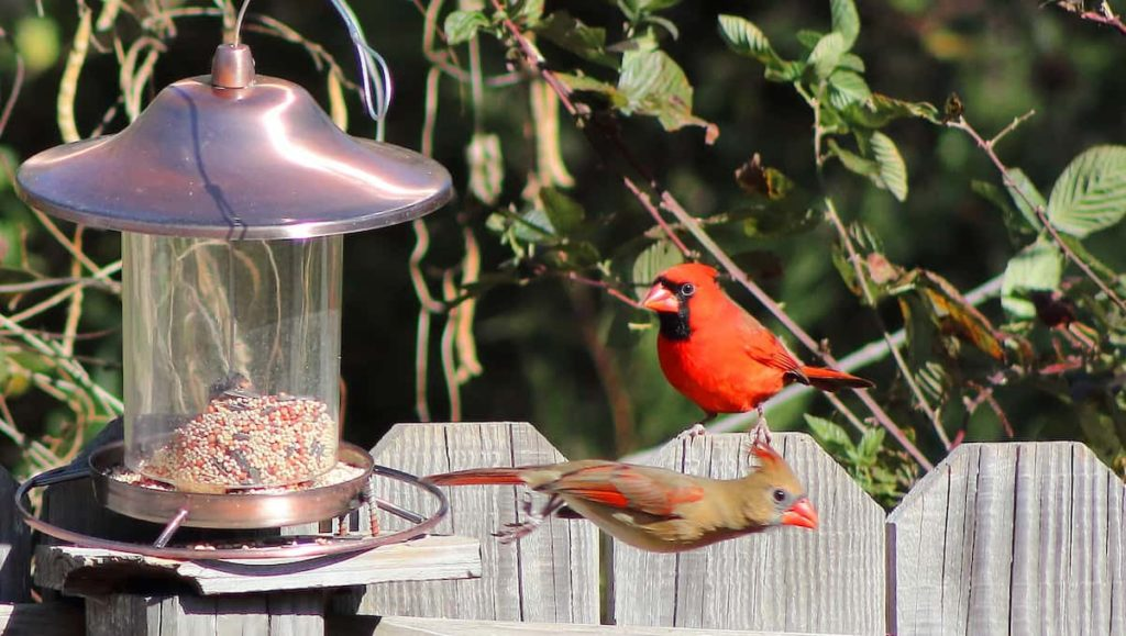 Choose the Right Type of Bird Feed
